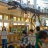Polybel au Musée Redpath