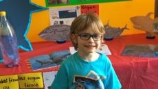 Les requins du monde, le projet de la classe 950 à l'école du Grand-Chêne