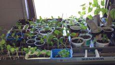 On Osentreprendre en cultivant à De La Broquerie